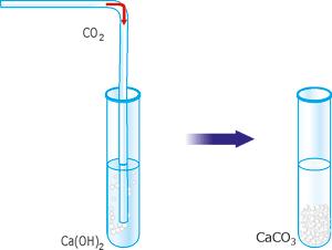 Взаємодія вуглекислого газу з вапняною водою