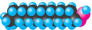Модель молекули пальмітинової кислоти