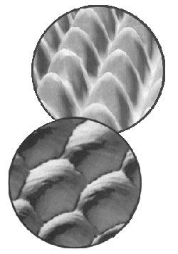 Атоми Ніколу та Платини