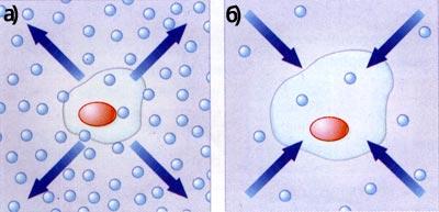 концентрація солей у клітині